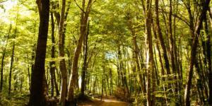 Mejores bosques de la Comunidad Valenciana