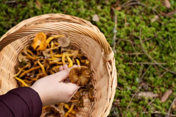 Sitios para buscar setas en Tarragona - Bosque de la Marquesa