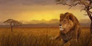 Dónde ver animales en África