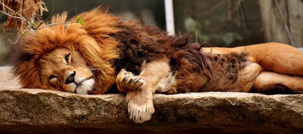 Dónde ver animales en África - Los mejores destinos para ver animales en África