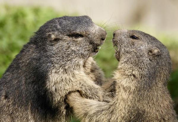 Dónde ver animales en Cataluña - Aran Park, ver animales en la Vall d'Aran