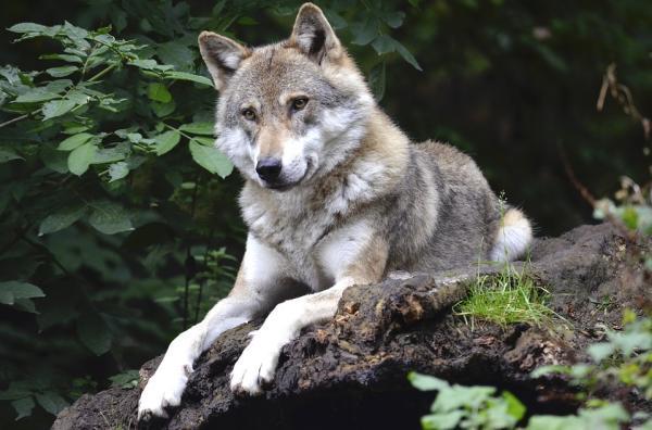 Dónde ver animales en Cataluña - Món Natura Pirineus