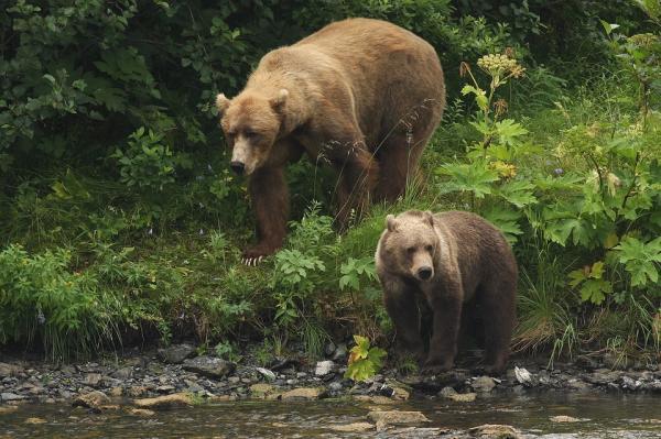 Dónde ver animales en Vietnam - Centros de protección de animales en Vietnam