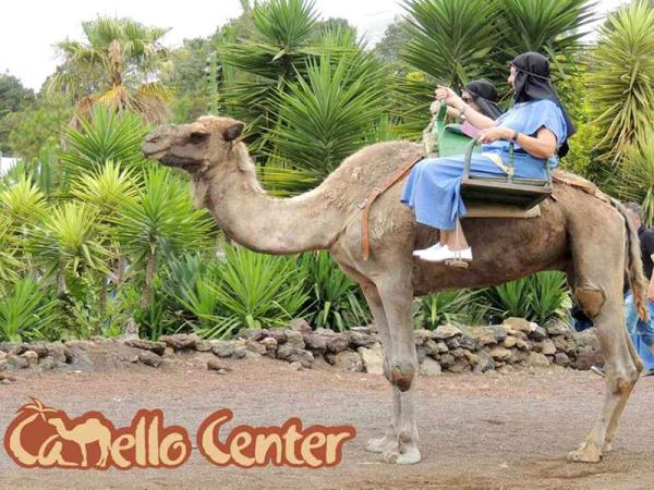 Dónde montar en camello en Tenerife - Camello Center, un espacio único para montar a camello en Tenerife