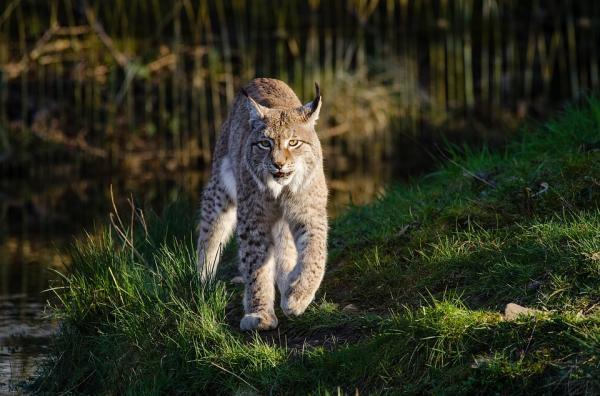 Dónde ver animales salvajes en España