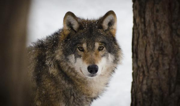 Dónde ver animales salvajes en España - La Cuniacha Huesca, otro parque para ver animales salvajes