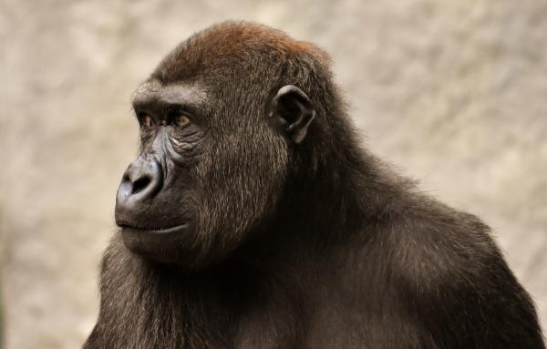 Dónde ver animales salvajes en España - Parque de la Naturaleza de Cabárceno