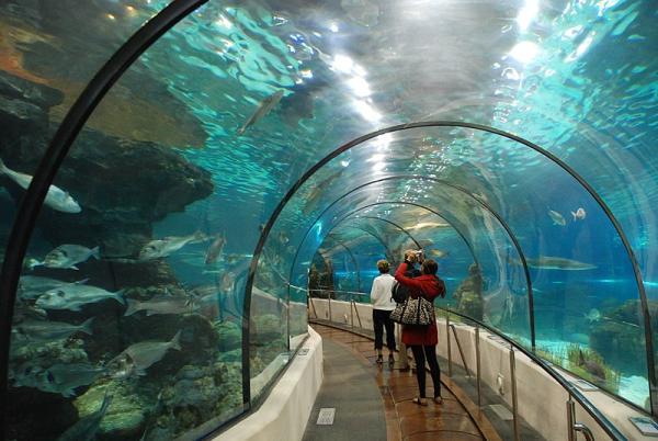 Qué ver en Barcelona con niños - L'Aquarium de Barcelona
