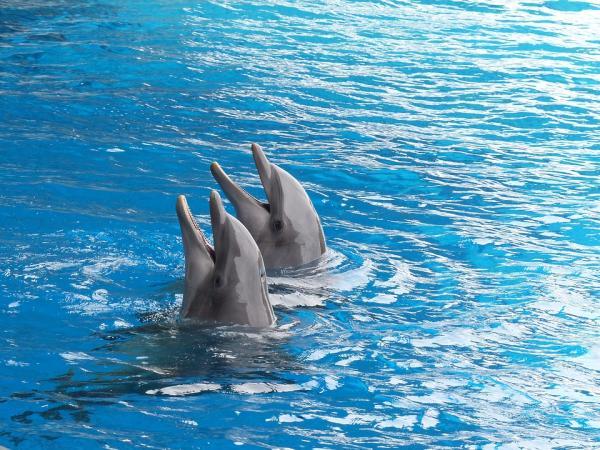 Lugares para nadar con delfines en Colombia - El Rodadero, Santa Marta: el mejor lugar para nadar con delfines en Colombia