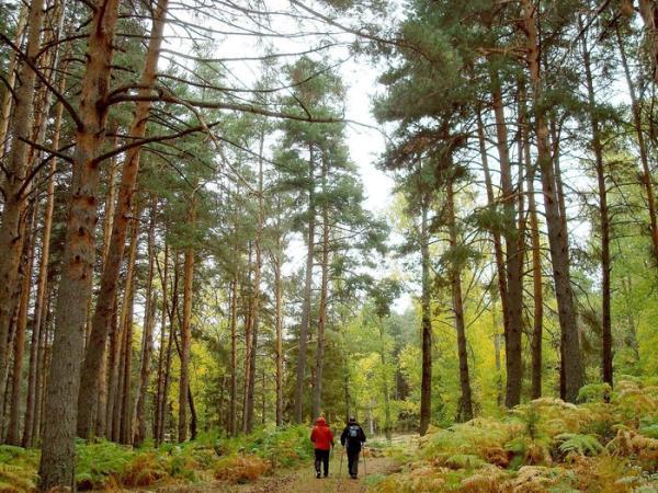 Los mejores bosques en Madrid - Abedular de Canencia