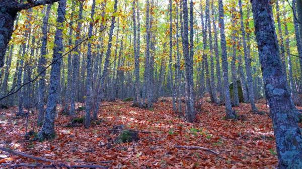 Los mejores bosques en Madrid - Castañar de Rozas de Puerto Real
