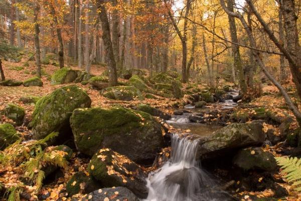 Los mejores bosques en Madrid - Valle del Lozoya