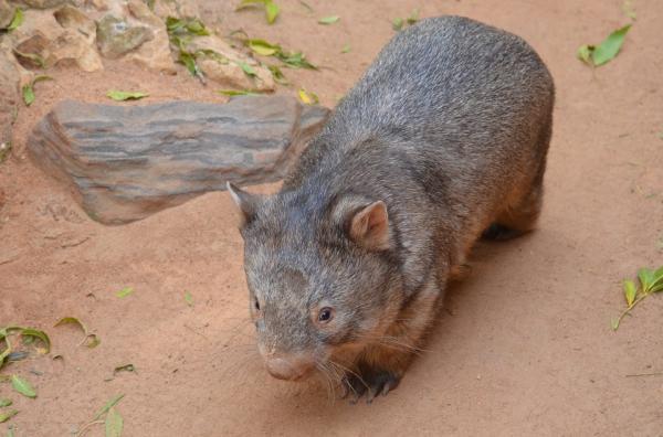 Dónde ver animales en Australia - Otros animales típicos de Australia