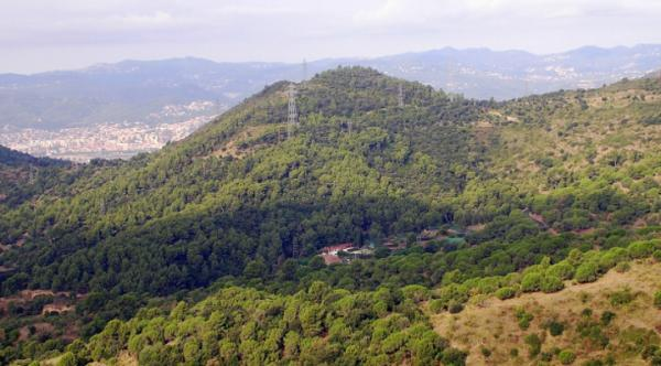 Bosques en Barcelona y alrededores - Parque natural de Collserola