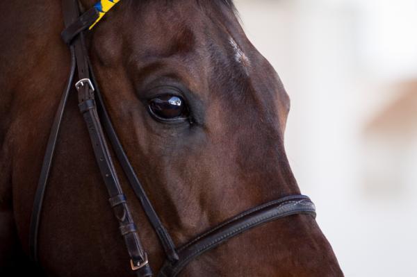 Las mejores carreras de caballos en Madrid - En qué consiste la temporada de carreras 2019