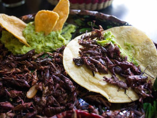 Dónde comer insectos en México - La Casa de los Tacos