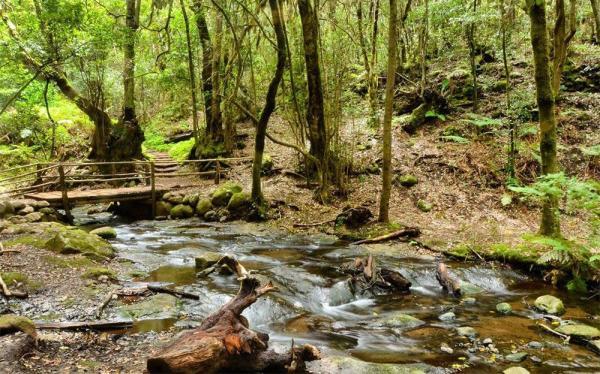 Los mejores parques naturales de España - Parque Nacional de Garajonay