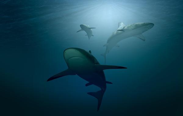 Dónde nadar con tiburones en Australia
