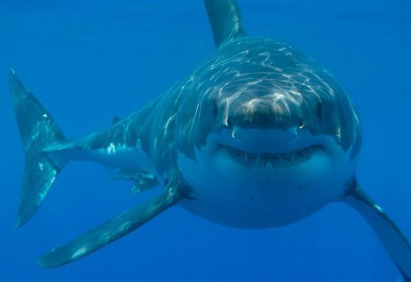 Dónde nadar con tiburones en Sudáfrica - Otros buenos sitios para nadar con tiburones en Sudáfrica