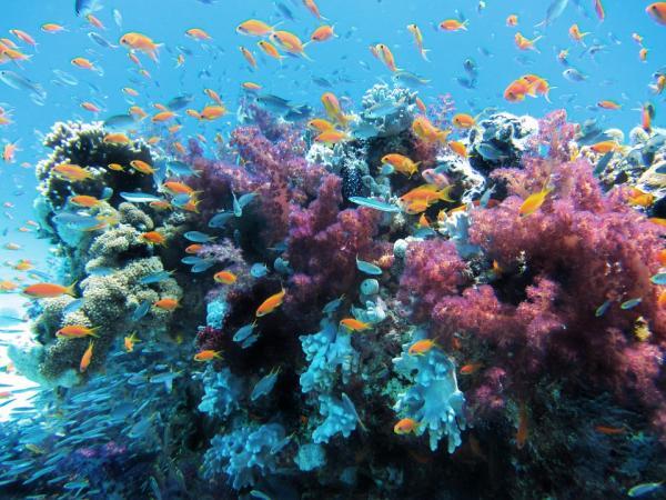 Dónde hacer submarinismo en España - Islas Columbretes (Castellón)