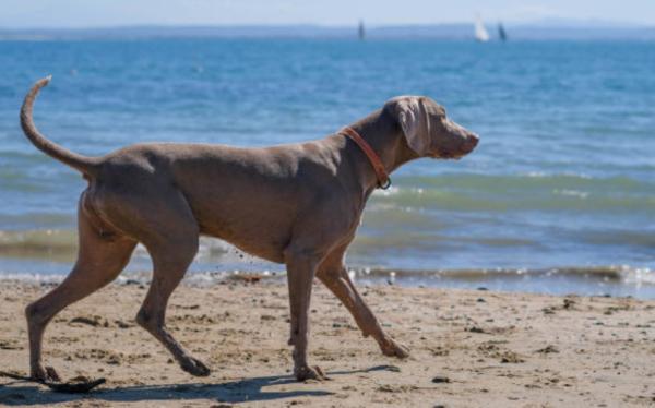 Playas para ir con perros en Valencia - Playa Punta del Riu (El Campello)